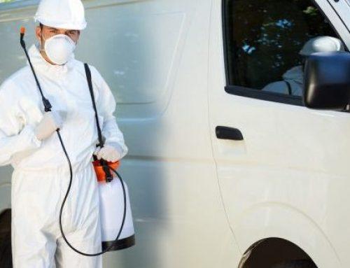 شركة مكافحة الرمة دبي |0508036816| القضاء عي الحشرات